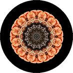 Mandala aus einem Apfel, Apfelmandala