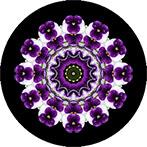 Mandala aus Stiefmütterchen mit schwarzem Hintergrund, Stiefmütterchenmandala