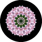Mandala aus Phloxblüten, Phloxmandala