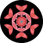 Mandala aus einem rosa Blatt, Blattmandala