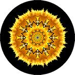 Mandala aus einer gelben Blüte, Blütenmandala in gelb