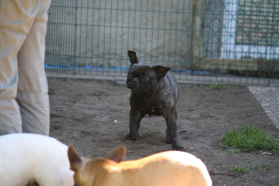 Und Coco rüttelt sich und schüttelt sich... ;-)