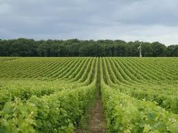 Vignobles de Quincy