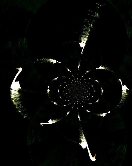 starlight? swanlights