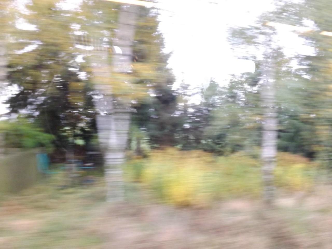 Herbstbäume versuchen sich Impressionismus - erfolgreich