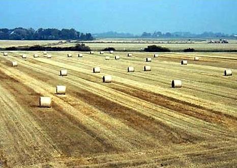 Reiterhof Jacobs Landwirtschaft und Futterbau