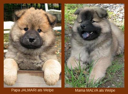 ... so sahen die Eltern Jalmari und Malva als Welpen aus