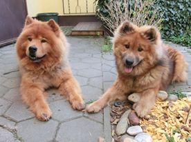 """Shiwa & Ronja """"best friends"""" ! (April 2013)"""
