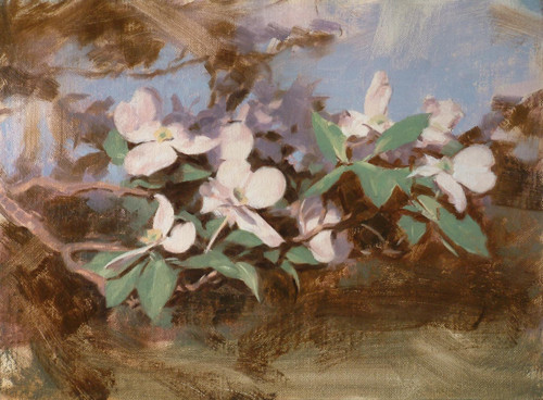 Dogwood- oil painting by Peter Schaumann