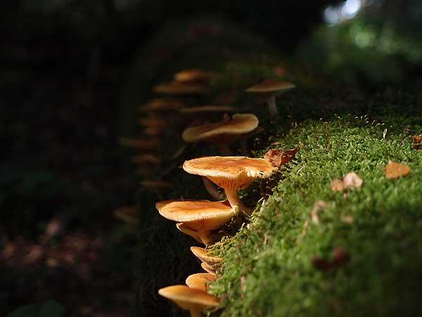 einsamer platz im wald mit moos bewachsener baumstamm und pilzen