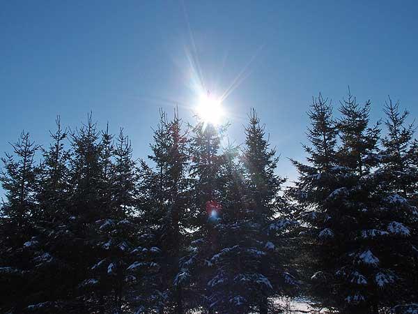 sonnenstern auf tannenspitzen und schneebedeckt vor einer winterlandschaft