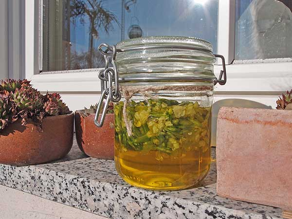 schlüsselblumenöl braucht 2 bis 3 wochen an einem warmen, sonnigen platz zum reifen