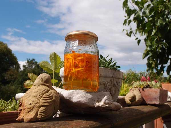 ein glas mit sonnenblumenöl und abgezupften ringelblumen reift in der sonne