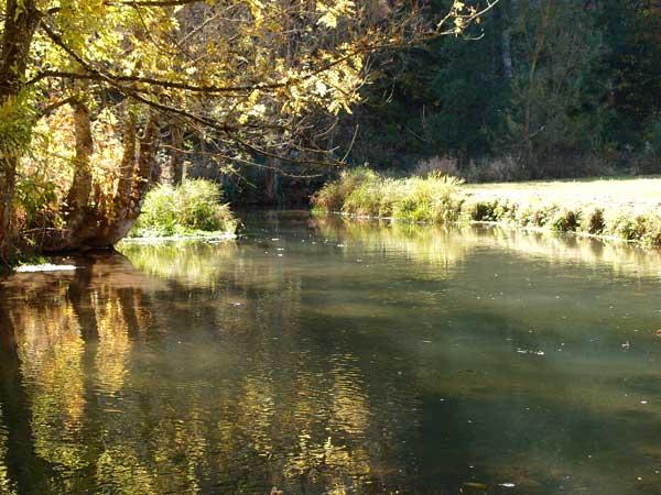 nachmittagssonne an der lauter, spiegelung der bäume und büsche im wasser