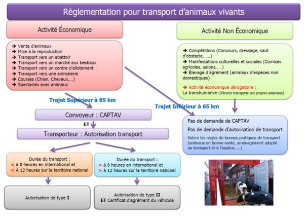 Schéma récapitulatif de la réglementation en vigueur