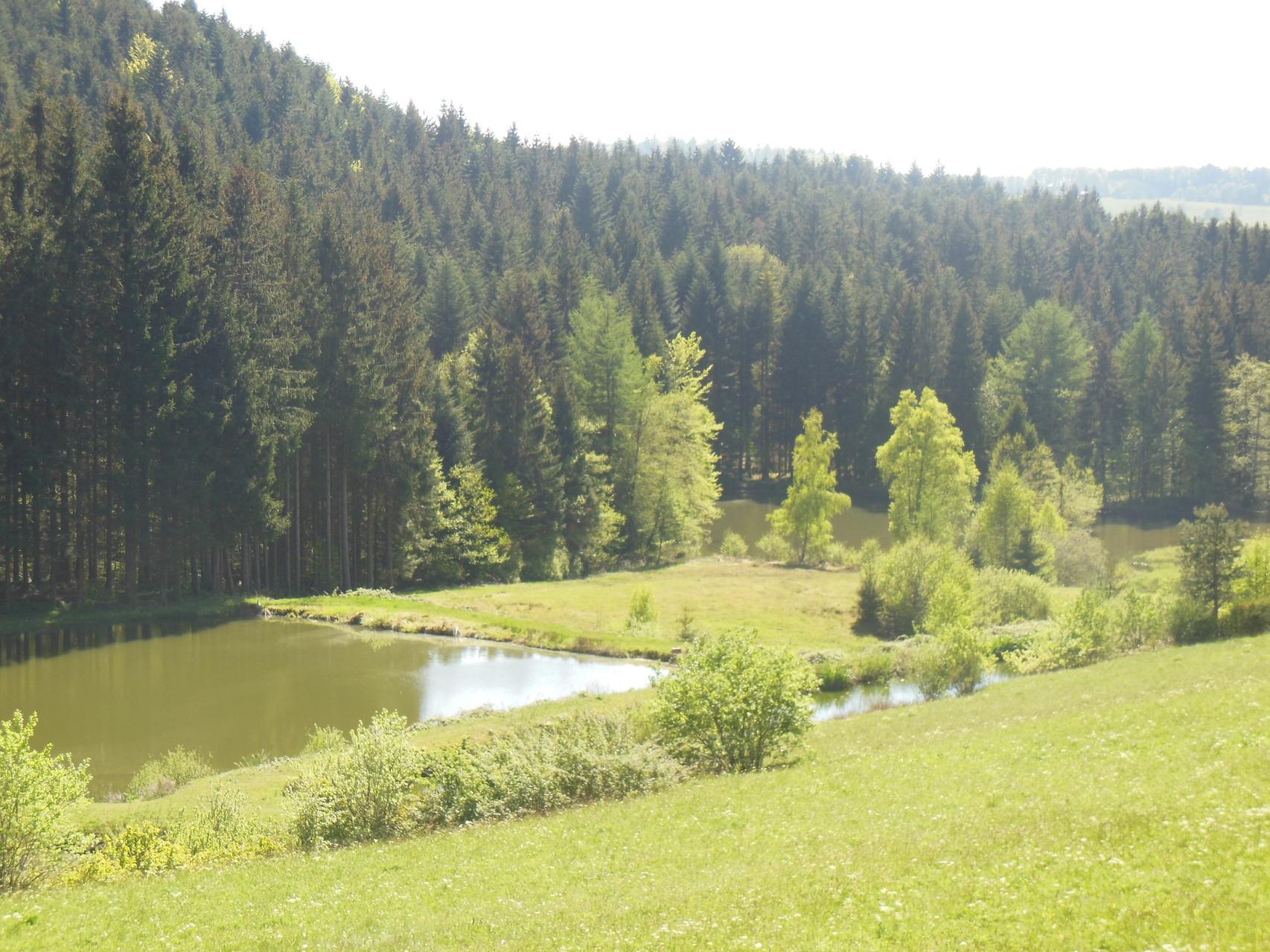 Vue du gîte sur étangs au printemps