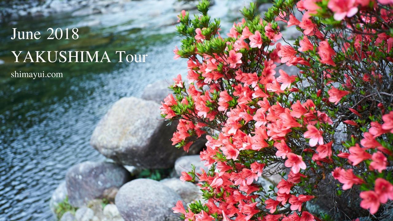6月の屋久島ツアーご予約状況