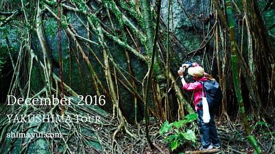 2016年12月屋久島ガイドツアー空き状況(もののけ姫の森、縄文杉、縄文杉1泊など)