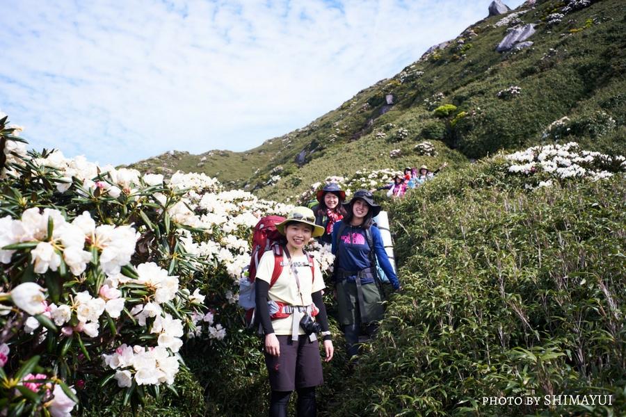 屋久島しゃくなげの季節、宮之浦岳登山道は、花の楽園に。