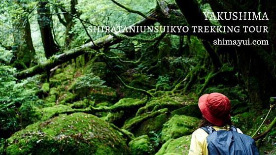 8月の白谷雲水峡・太鼓岩ツアー 苔の広がる森から、絶景・太鼓岩へトレッキング!