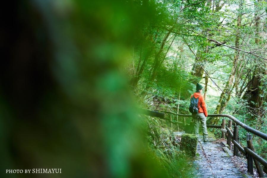 ヤクスギランド,苔ワールド,屋久島,ガイドツアー,半日過ごし方,屋久杉,トレッキング
