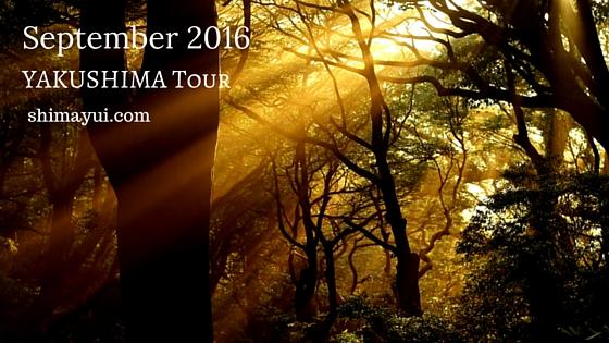 2016年9月屋久島ガイドツアー空き状況(もののけ姫の森、縄文杉、縄文杉1泊など)