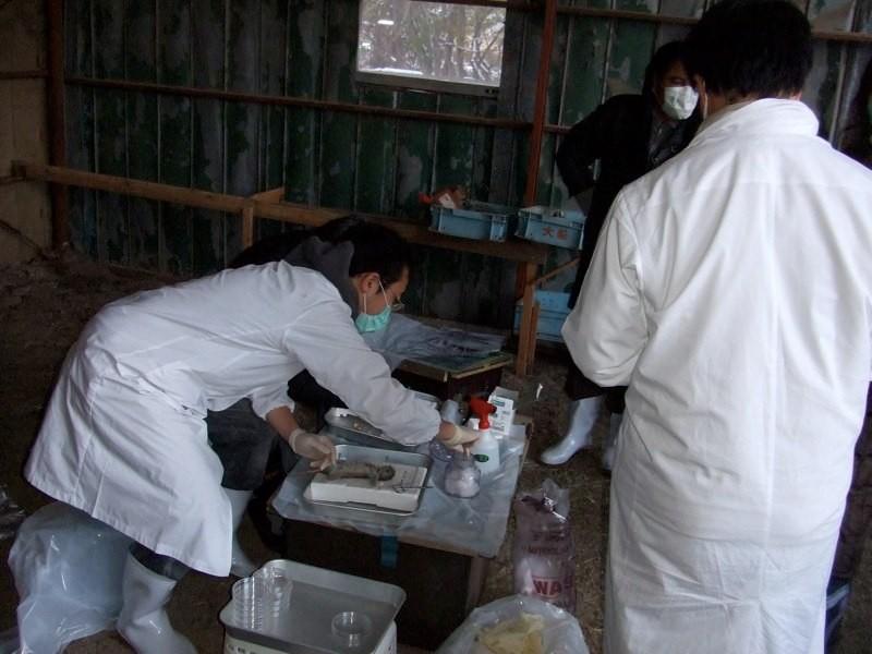 北海道の森町でのげっ歯類調査