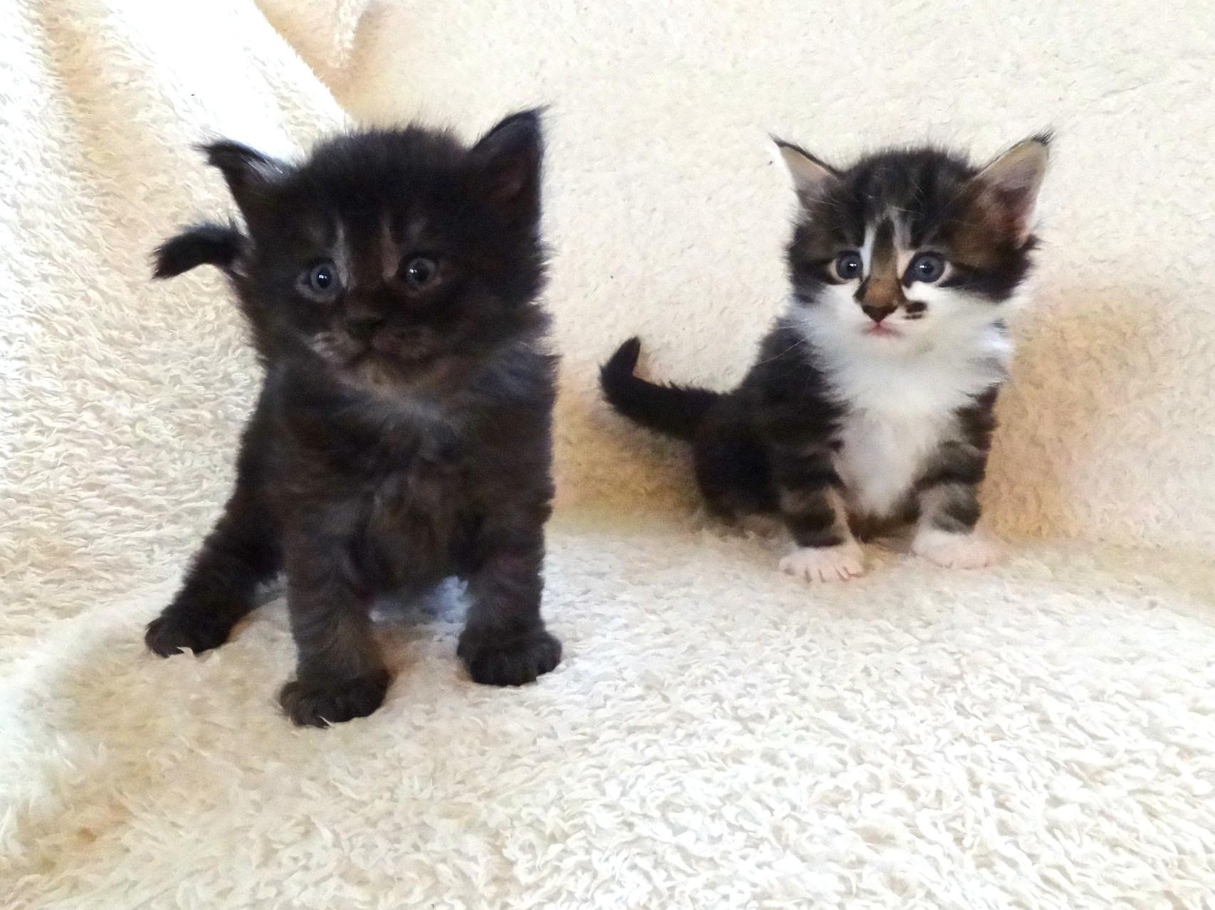 Asti und Amun 4 Wochen alt, 30.9.14