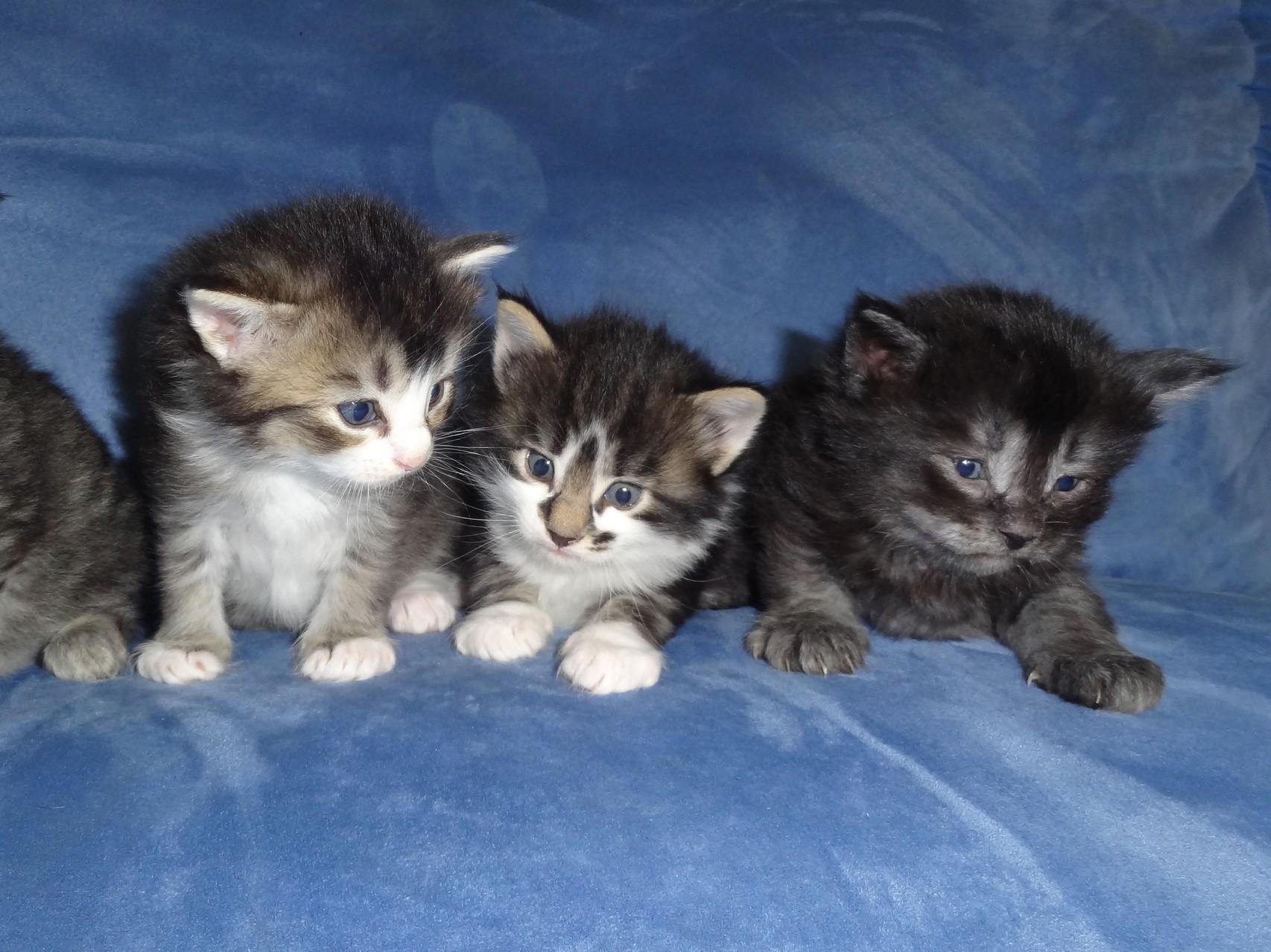 Amaris, Amun und Asti 3 Wochen alt, 26.9.14