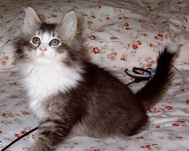 Alisa als Kitten