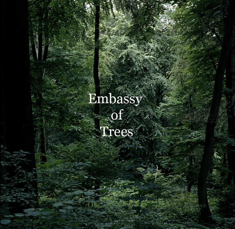 """Embassy of Trees"" ©Ellen Bornkessel"