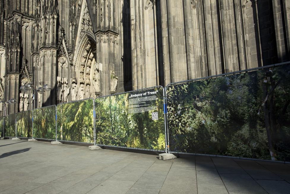 "Ellen Bornkessel I ""Embassy of Trees"" vor dem Kölner Dom"