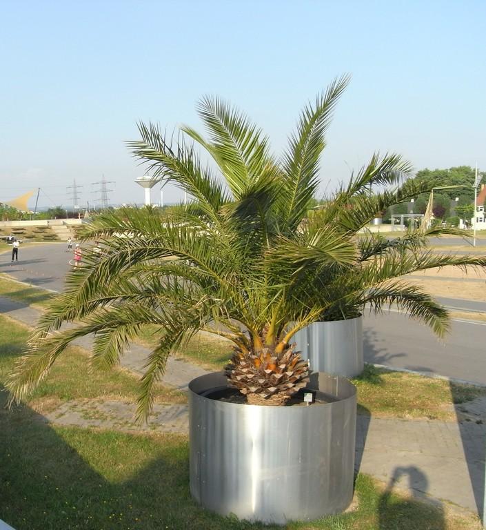 Palmen im Neulandpark