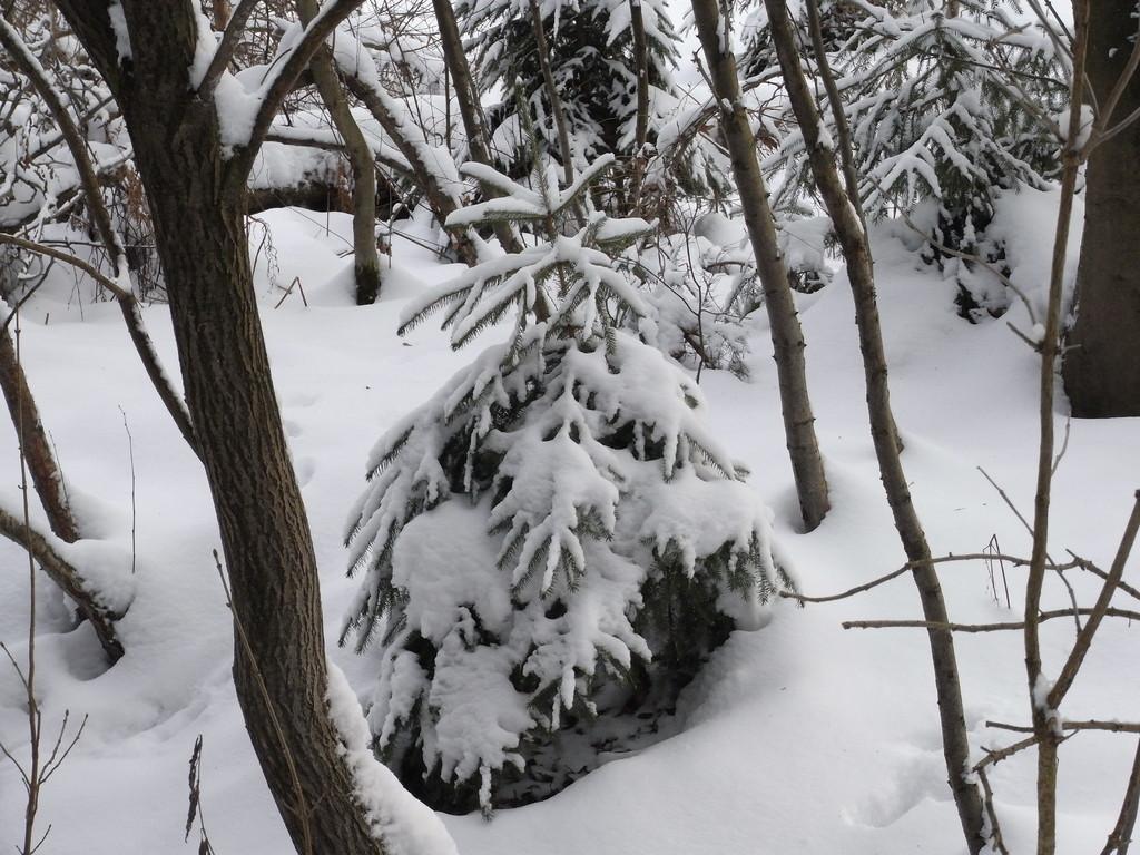 Winter im ´Bürgerbusch´, Leverkusens größtem Waldgebiet