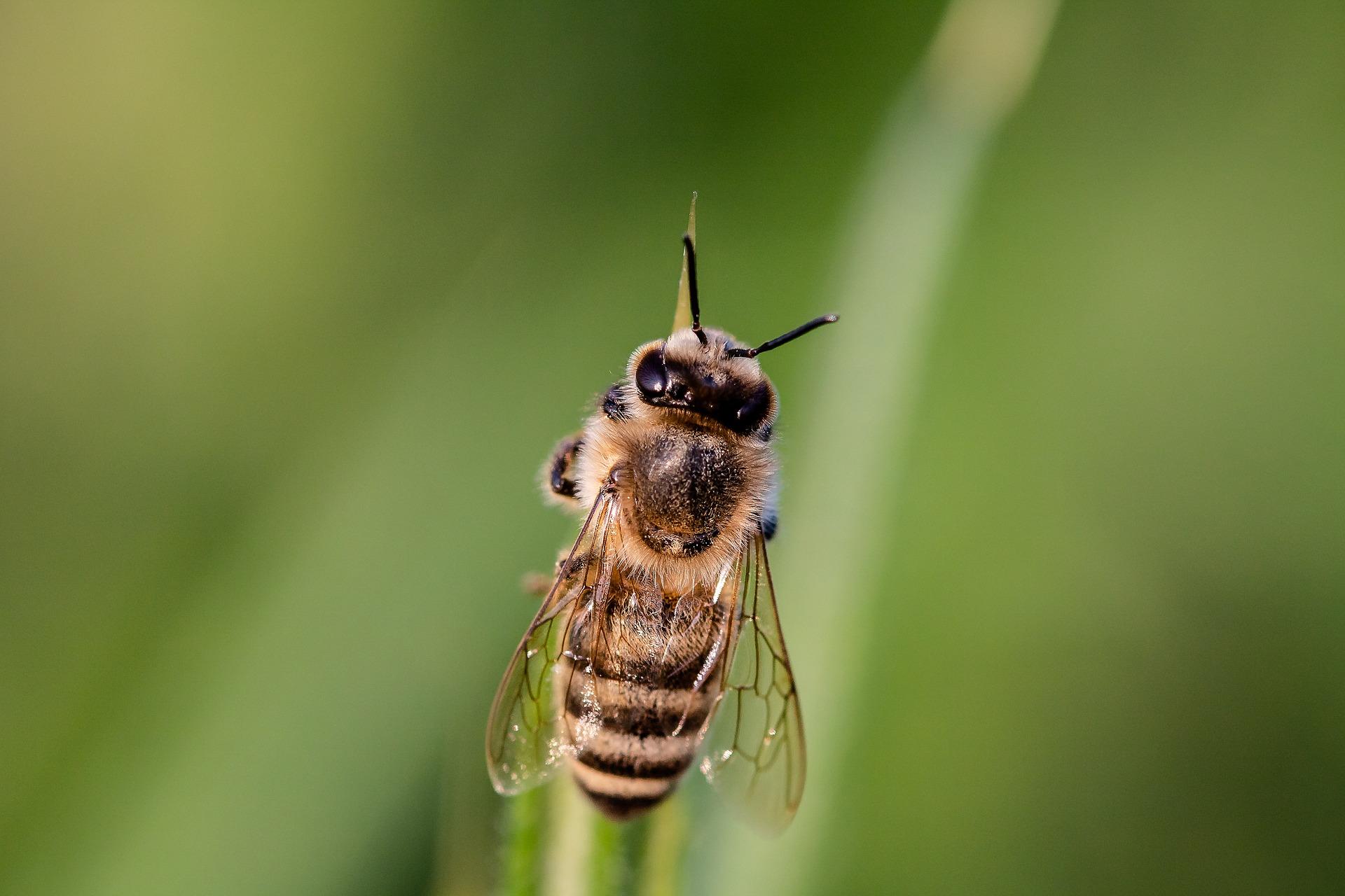 #4 Warum sind die Bienen so wichtig für uns?