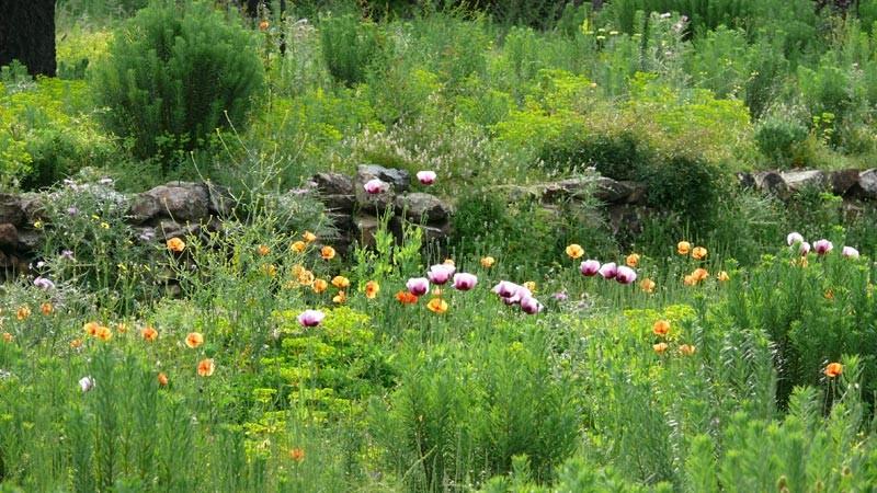 """Hola Julia!! Es grünt 2013 in Spanien so grün wie Blumen blühen! Neues Leben und PermaKultur im Garten Eden auf der Finca """"AquariOasis"""" in Capmany / Katalonia"""