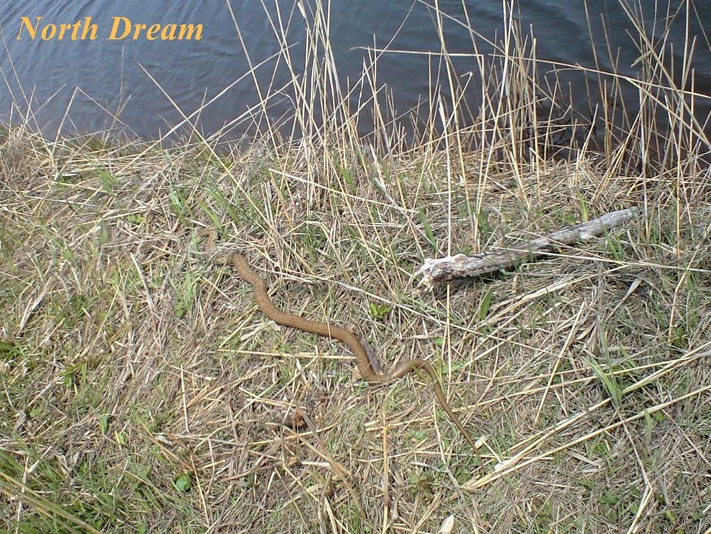 シマヘビの日光浴 1.5m位?