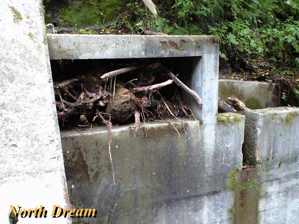 魚道3 原因は流木