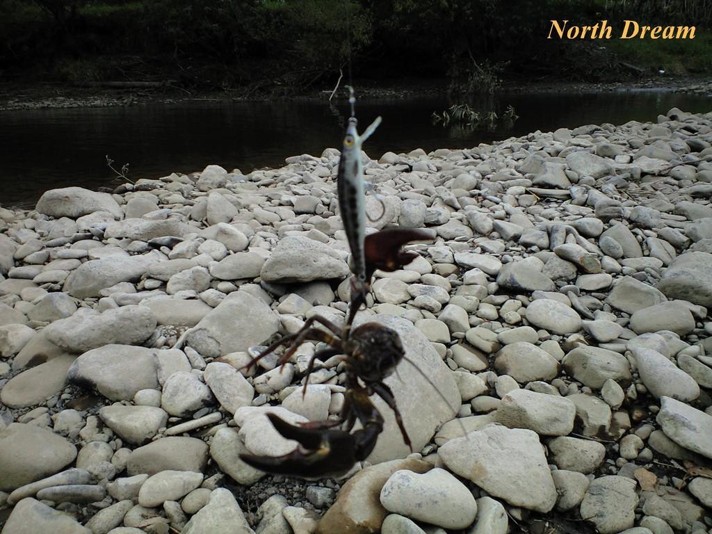 ウチダザリガニ釣り ミノーは ST Minnow の新色テストモデル 黒フクドジョウカラー