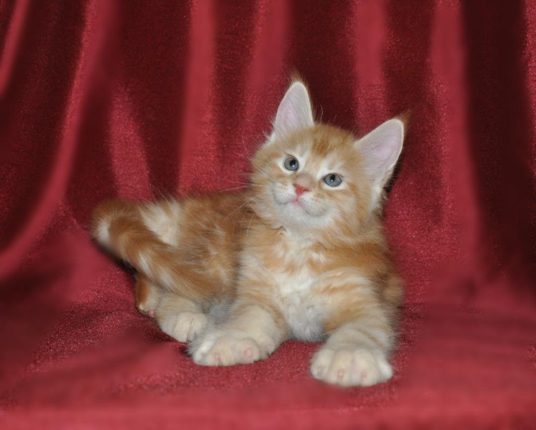 Dimitri, 7 weeks