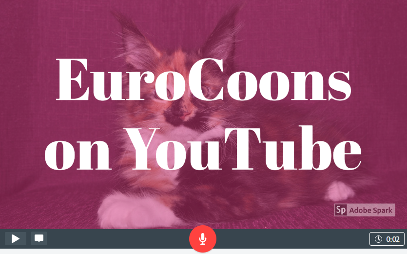 Maine Coon YouTube