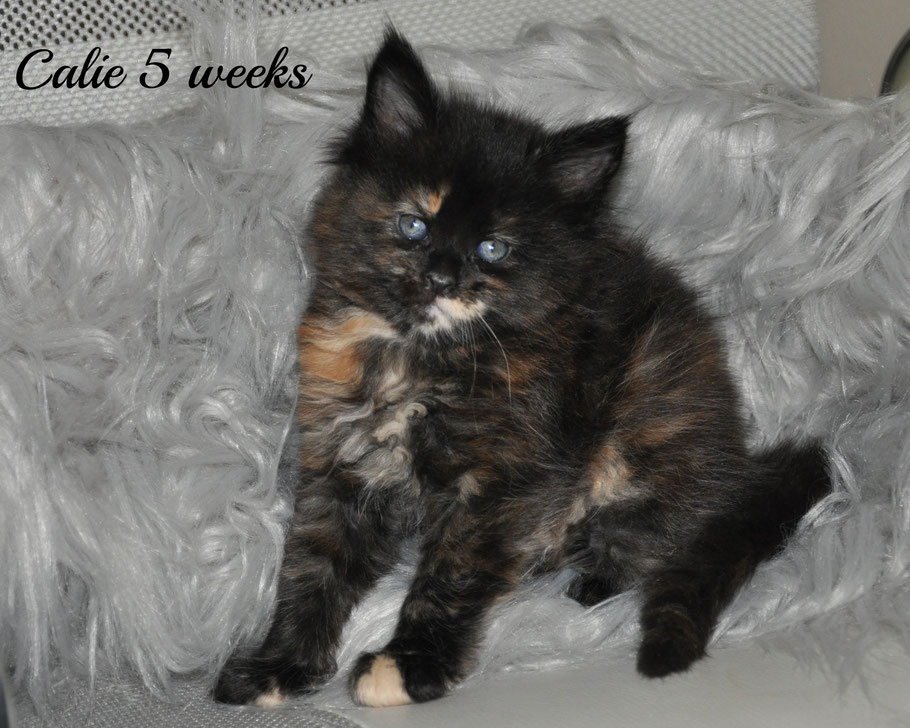 Calie 5 weeks