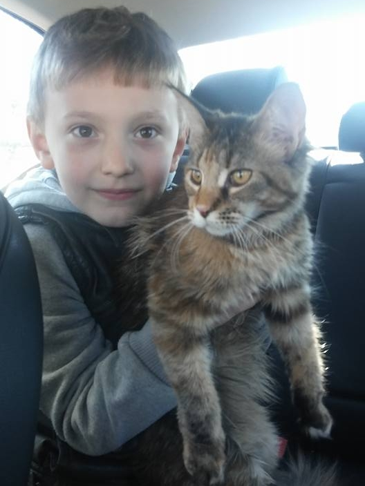 Our very first Maine Coon Kitten Europa with our son, Stas in 2015