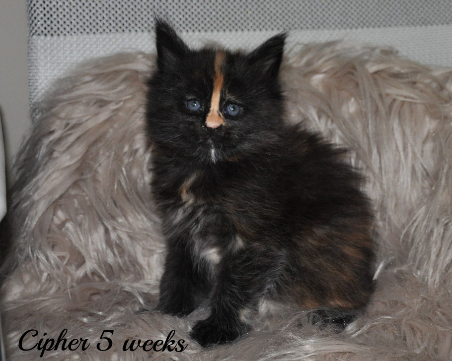 Cipher 5 weeks