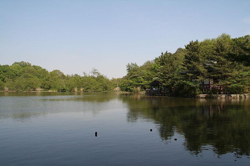 石神井公園の三宝寺池(写真は公園HPよりお借りしました)