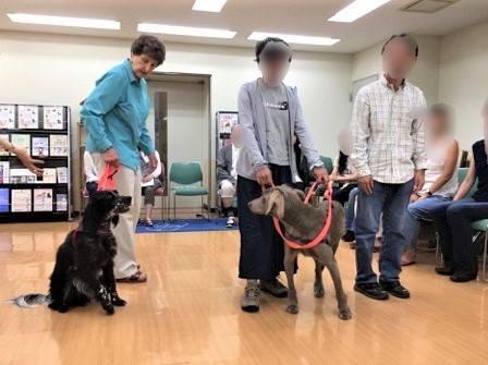 犬のデモ:いまに意識を集中して広い視野で動物を観察し、触れる