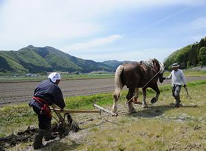 畑を耕す馬(画像は日本列島知恵プロジェクト様よりお借りしました)