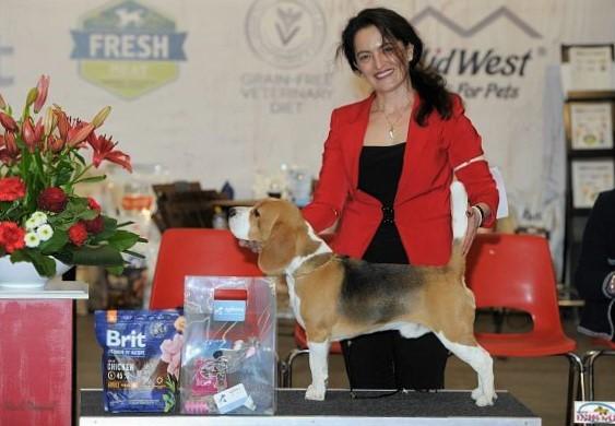 Bagio Boss Gintarine Fortuna * Lord James *, Czarnowsky , Beagle, Beagle, Beagle, Beagle, Beagle, Champions, Winner, the Best