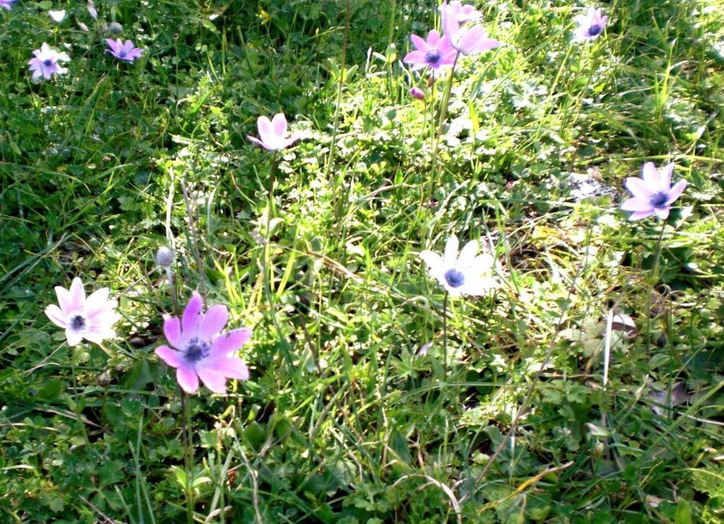 viele verschiedene Blüten auf kleinstem Raum das ist Natur