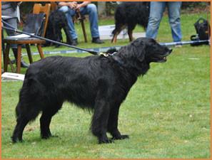 Haley von Rupertigau, schönster Hund der Rasse (BOB)